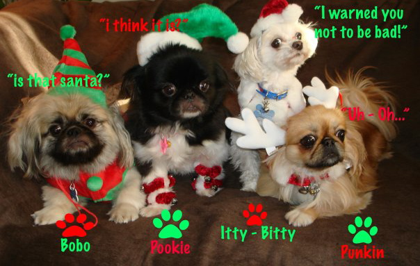 can - Funny Dog Christmas Cards