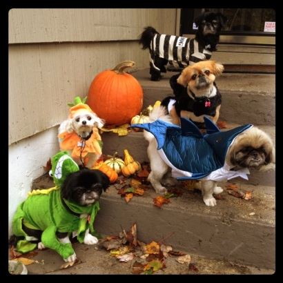 all of ava aston's halloween dogs dressed up in costume for trick or treating