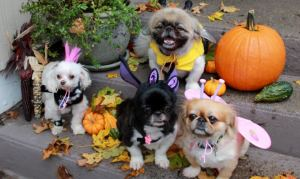 Just hurry up and take the pic so you can get these costumes off of us!