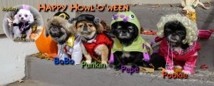 First Halloween without Itty Bitty he had just passed, so we super imposed him from last year.