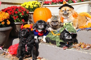 Bad enough we're dressed in costumes... now we have a new dog in our pack... Ov vey!